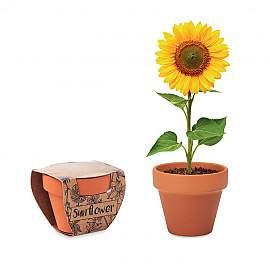 Vas floarea soarelui